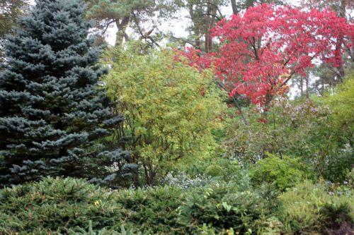 rosa roxburghii 3 gb 6 oct 2012 020 (4).jpg