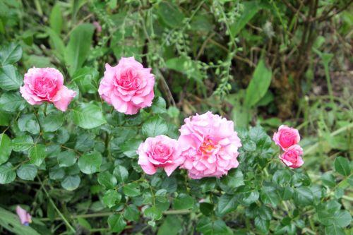 5 x romi 9 juin 2012 056.jpg