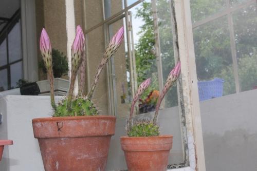 cactus 8 juil 2017 016 (2).jpg
