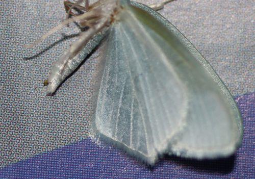 papillon rec veneux 13 janv 2014 002.jpg