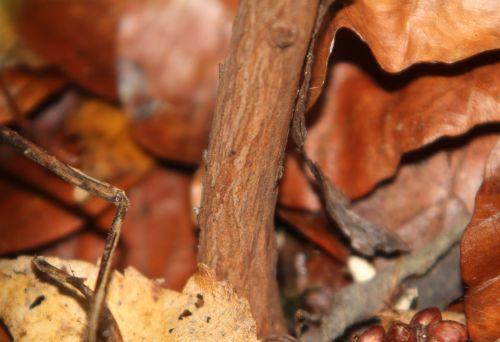 tr arbutus x andrachnoides 30 déc 2012 002.jpg