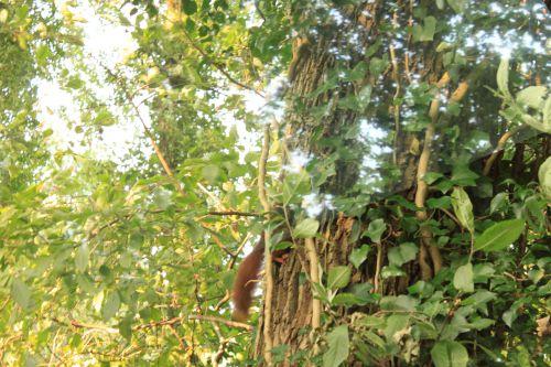 écureuil queue veneux 24 sept 2014 IMG_9110.jpg