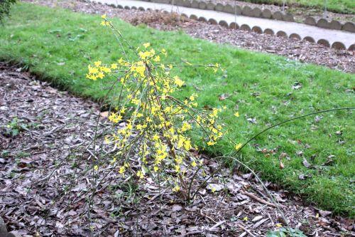 6 jasminum nud paris 24 déc 2012 057.jpg