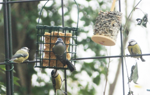 11 oiseaux veneux 14 dec 2015 006.jpg