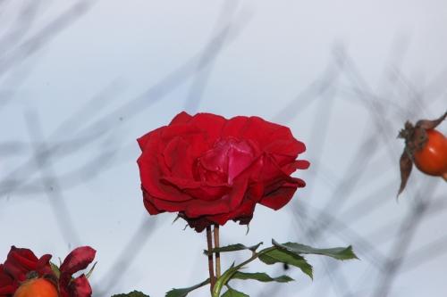 red parfum s  romi 2 dec 2015 006 (2).jpg
