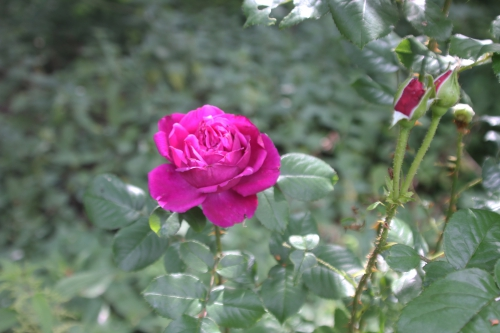 14 falstaff romi 20 juin 2015 007 (4).jpg