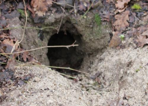 2 trou près romi 17 janv 2015 022.jpg