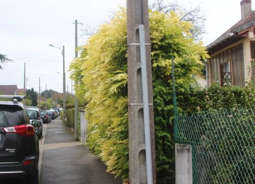 wisteria veneux 17 oct 2016 001.jpg