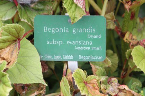 8 begonia gr paris 2 juil 2011 185.jpg