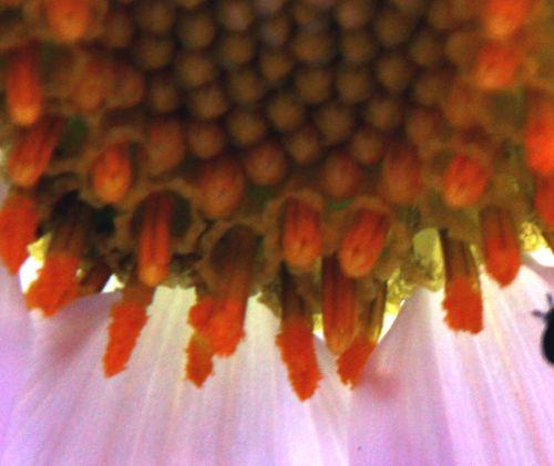 dahlia arborea étam  paris 1 dec 2013 095 (9).jpg