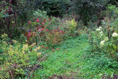 4 hydrangea romi 14 octobre 2013 024 (2).jpg