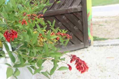 erythrina cristagalli marnay 11 sept 2016 087.jpg