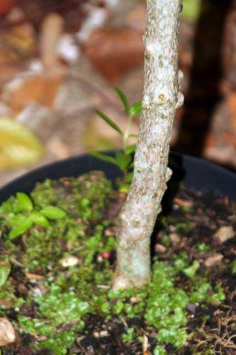 zantho sim arbofolia 9 oct 2010 117.jpg