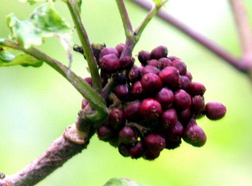 coreana 2 fruits romi 15 juin 2010 053.jpg