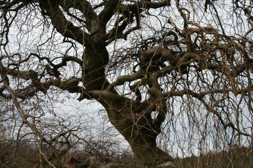 verzy st basle branches 13 janv 090.jpg