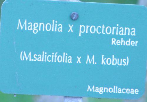 magnolia proct paris 23 mars 018.jpg