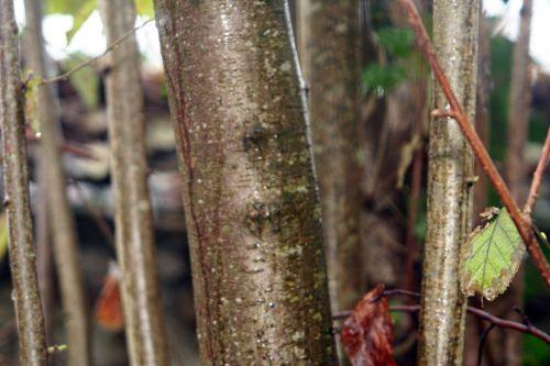 corylus veneux 6 déc 2010 p 048.jpg