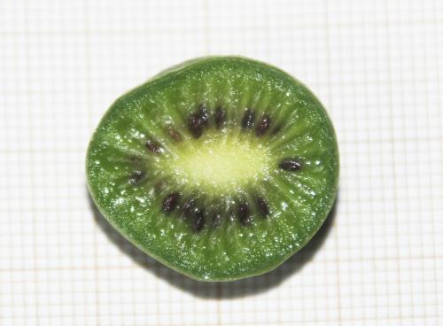 5 actinidia melanandra veneux 5 oct 2015 006 (4).jpg