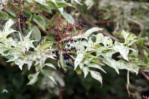 pulv fruits marnay 18 sept 2010 003.jpg