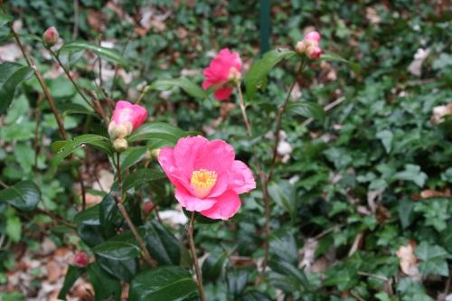 18 spring promise 24 mars 021.jpg