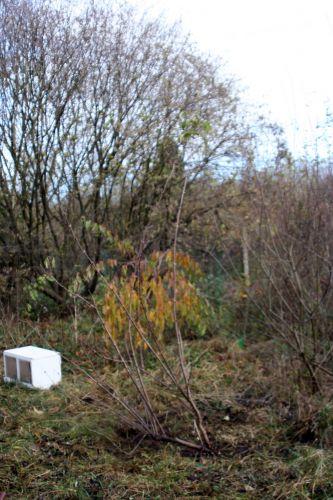 tigranii romi 13 nov 008.jpg