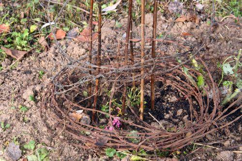 rosa barbelés 16 nov 2010 018.jpg