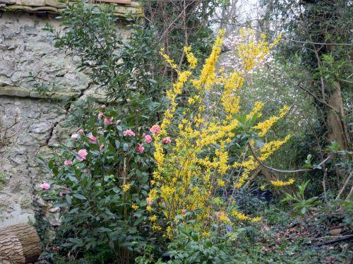 jardin, nature