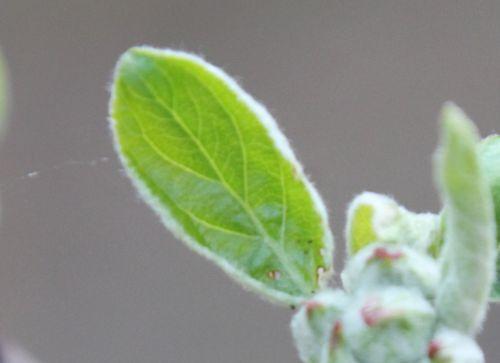 malus winter b romi 30 mars 2012 039.jpg