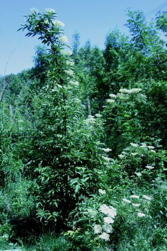 viridis romi 4 juin 044.jpg