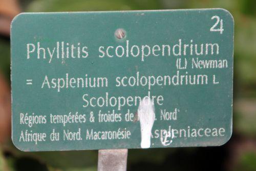 scolopendre 7 paris 21 janv 2012 199.jpg