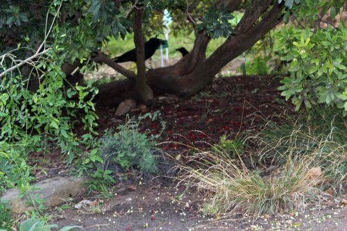 arbutus paris 14 déc  2011 072 (1).jpg