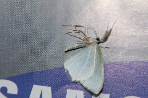 1 papillon veneux 13 janv 2014 006.jpg