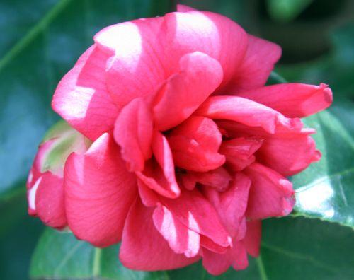 kasuga yama veneux 18 mars 015.jpg
