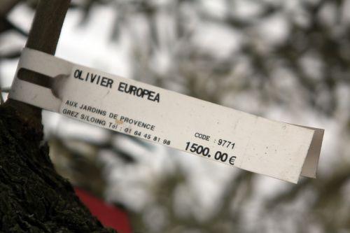 oliviers étiq 17 fev 2012 004.jpg