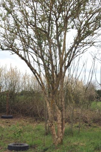 3 nigra djamila gb 9 avril 2012 216.jpg