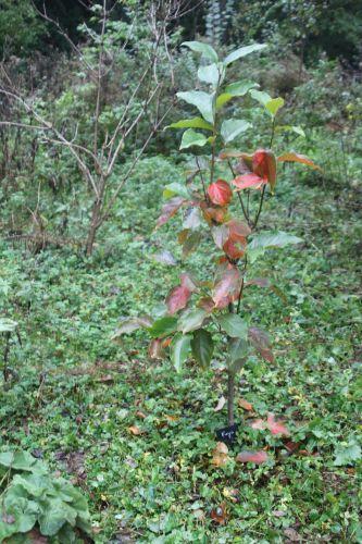 1 fuyu romi 10 oct 2012 032.jpg