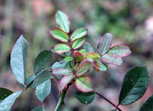 5 fraise des bois romilly 22 janv 2012 031.jpg