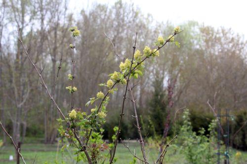 plumosa vir romi 13 avril 2012 069.jpg