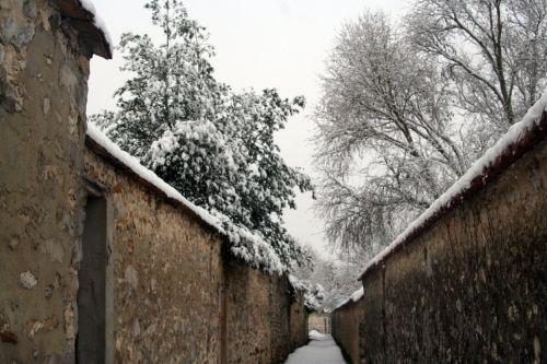 neige 20 déc 2010 013.jpg