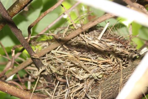 16 nid veneux 16 juin 2016 018.jpg