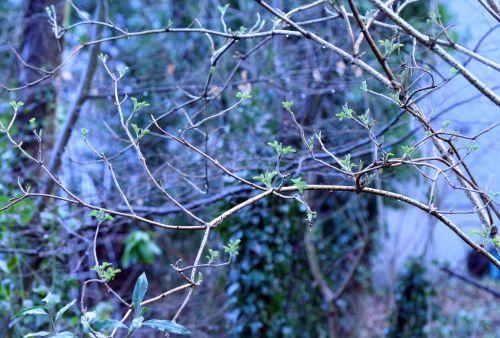 palmensis veneux 6 février 038.jpg