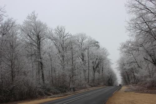5 givre forêt veneux 1 janvier 006 (1).jpg