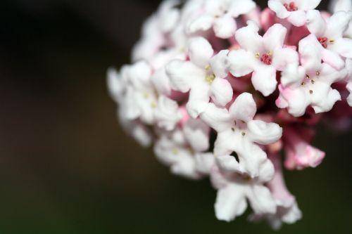 vib far fleurs paris 17 nov 009.jpg
