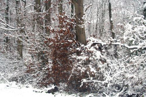 neiges charme 20 déc 2010 081.jpg
