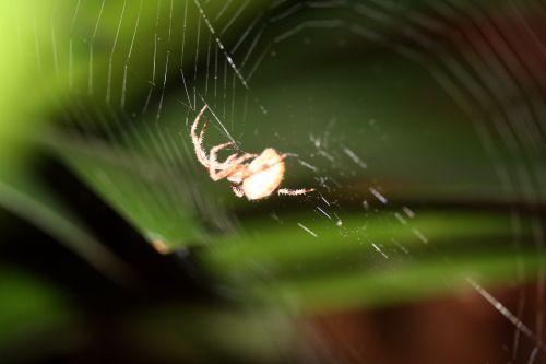 araignée toile 21 oct 035.jpg