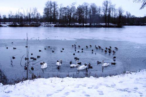oiseaux neige 21 dec 001.jpg